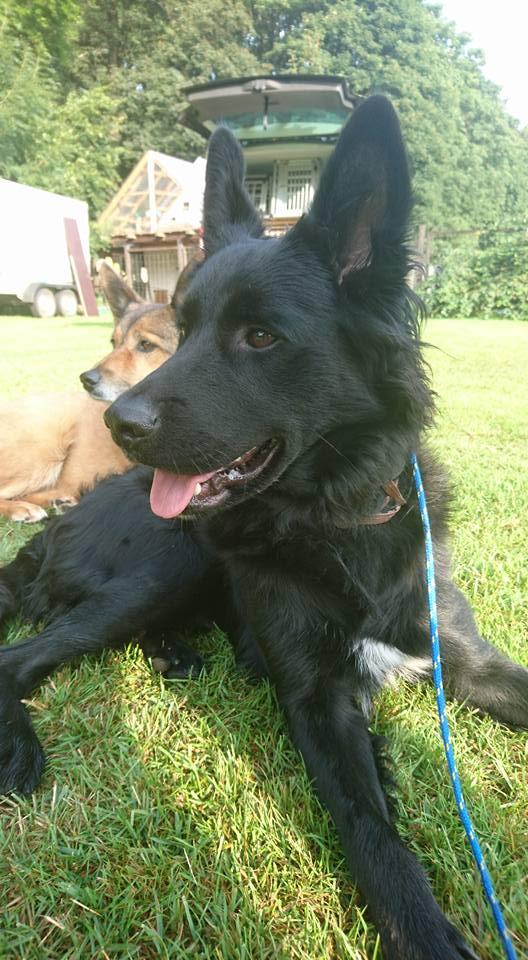 ... der Kleintierpension und Hundetagesstätte KaNaPe Freiberg bei der